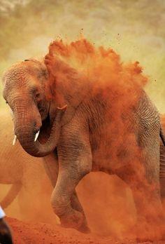 Elephant kicking up dust.