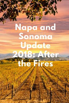 Depending on where your Wine Country adventure takes you in Napa and Sonoma, you may not see the fire scars. Napa Valley Wineries, Sonoma Wineries, Napa Sonoma, Sonoma Valley, Sonoma County, Napa Winery, San Diego, San Francisco, Sonoma California