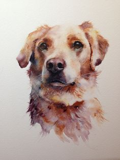 cross breed dog painting as a commission by watercolour artist jane davies