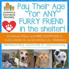 Pay Their Age Adoptions Jacksonville Humane Society Google Search In 2020 Cat Adoption Humane Society Adoption