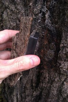 "Bark as camo on this magnetic keyholder geocache.  ""One up"" on the removable branch :) Seriously....does anyone find something like this?"