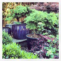 Garde / zen taken from Instagram/cecilekdjian