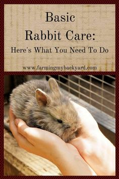 Basic rabbit care is pretty simple, and doesn't always take a lot of time. Here's what you need to do to raise your own meat rabbits.