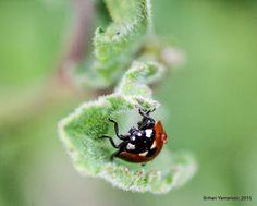 Lady Bug by Srihari Yamanoor on 500px