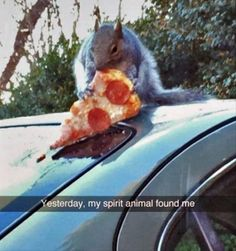 funny-animals-3-3 funny animal pictures pictures funny Animals