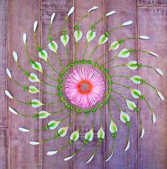 Danmala – Flower Mandala Art