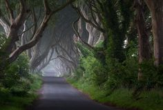 Dark Hedges. Ireland.