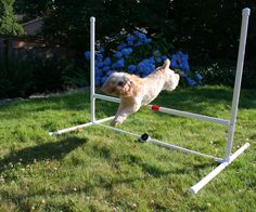 Diy pvc outdoor dog shower how to diy shopcraft pinterest dog agility jump solutioingenieria Gallery