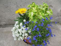Mit ültessek a muskátli mellé? | Balkonada - magaslati éden, akár a tizediken is Balcony Garden, Plants, Garden, Petunias, Container Gardening