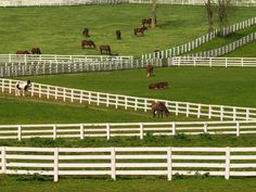 lexington ky | The barns were not red; I thought it was probably a law that barns in ...