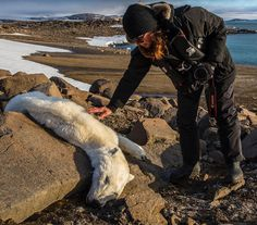 A photograph of a scrawny, dead polar bear in Svalbard, Norway, could be an example of how global warming is already impacting this iconic species. Our Planet, Save The Planet, Planet Earth, National Geographic, Svalbard Norway, Save Our Earth, Global Warming, Mother Earth, Climate Change