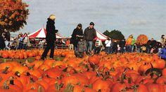 Goebbert's Family Pumpkin Patch and Farm Market
