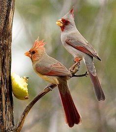 Beautiful birds winter