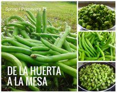 Salir a la huerta y alimentarse del fruto de tu tierra ¡no tiene precio! organic food and gardening in our cottage in Spain #TravelersChoice2015