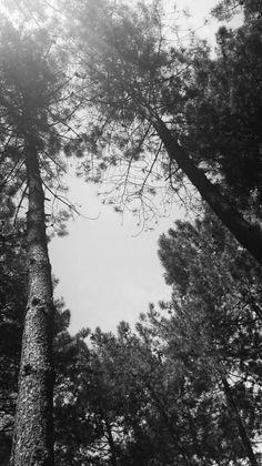 Ağaçların arasındaki boşluk