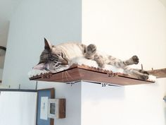 Fabric-covered Corner Cat Shelf by CatastrophiCreations on Etsy