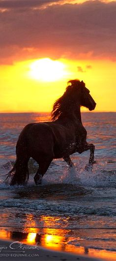 Nature | Animals | Horses | RosamariaGFrangini || Running in the sunset