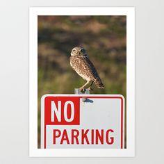 Burrowing Owl  Art Print by Ooh! Look! Photography  - $30.00 Burrowing Owl, Owl Art, Art Prints, Photography, Art Impressions, Photograph, Fotografie, Photoshoot, Fotografia
