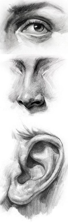Stan Prokopenko. ear, eye, nose #anatomydrawing