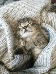 Adorable kitten taking a nap.