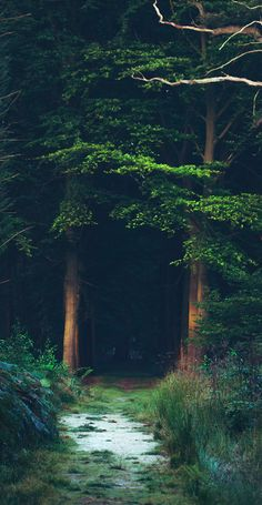 Grandmother's Trail /// [Early morning light at the wetlands near Bruges, Belgium • photo: Mathijs Delva on Flickr sweater]