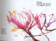 Skyeshell Magnolias