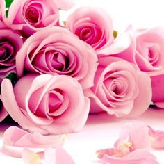 #pink #roses #bouquet