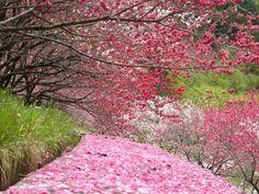 花桃の里 - みどころ|昼神温泉観光局【公式ホームページ】|温泉自慢 信州の温泉