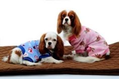 Paw Appeal Holiday Dog Pajamas Large Blue from SHANGHAI YOURPET PRODUCTS CO  $15.99   BuyDogSweaters.com