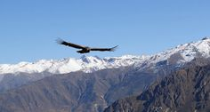 Colca Canyon Has it All http://sihpromatum.com/2015/11/01/colca-canyon-has-it-all/