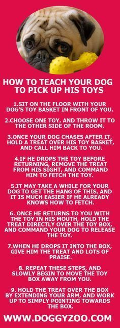Your dog can learn how to put away his own things!