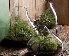 Roost Rustic Recycled Glass Bubble Dome Terrariums