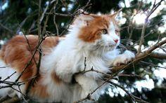 猫のきれいな画像を貼るよー(続き5):ハムスター速報