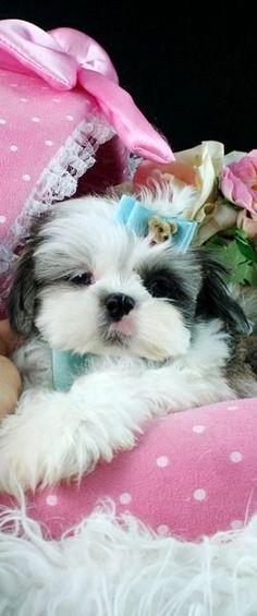 No Im not spoiled #rescuedog #dog #itsarescuedoglife
