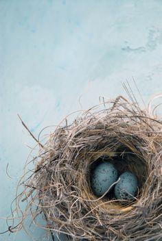 Bird's nest. by esperanza