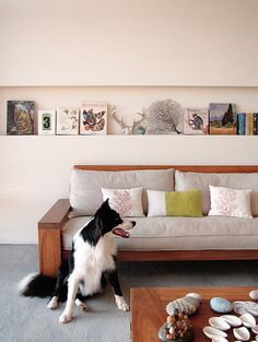 love this shelving, couch and concrete tile floors. that border collie is pretty cute too.
