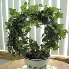 Ivy Topiary (Hedera helix)