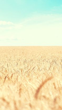 Golden Wheat Field iOS7 iPhone 5 Wallpaper.jpg 640×1,136 pixels