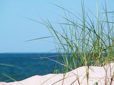 Dunes in Palanga Baltic Sea, Lithuania, Homeland, Dune, Fathers, My Photos, Spaces, Country, Beach