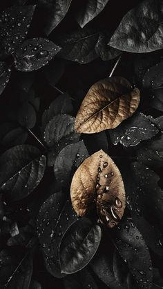 Dark Nature Foliage iPhone Wallpaper - iPhone Wallpapers