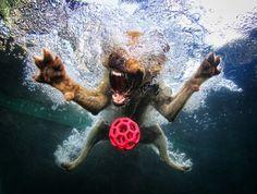Bardot, Yellow Labrador Retriever. Photograph taken by Seth Castell. #purpleclover #underwaterdogs