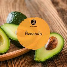 die besten 25 avocado einpflanzen ideen auf pinterest avocado z chten avocadokern pflanzen. Black Bedroom Furniture Sets. Home Design Ideas