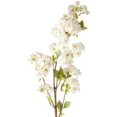 OKA Faux Cherry Blossom Branch ($19) ❤ liked on Polyvore featuring home, home decor, floral decor, flowers, fillers, plants, decor, backgrounds, effect and pale pink