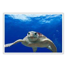 Sea Turtle - Turtle Buy it now  #turtles #turtleshirts #iloveturtles #turtle tshirts