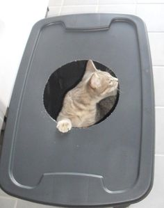 Unique Low Entry Litter Box for Older Cats