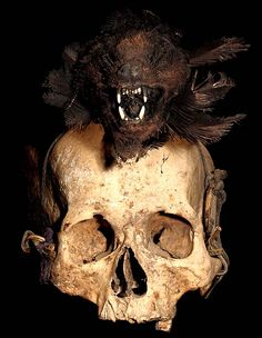 IFUGAO TRIBE: HUMAN HEAD HUNTING TROPHY SKULL #9  FIBER, RATTAN, FEATHERS, ANIMAL SKULL,  HUMAN SKULL, TEXTILE.  THE IFUGAO TRIBE, FROM THE PHILIPPINES, PLACE HEAD HUNTED  HUMAN TROPHY SKULLS OUTSIDE OF THEIR HUTS, AS WELL AS,   MOUNT THEM OVER THEIR HEARTHS INSIDE OF THEIR HOMES.