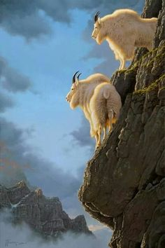 """""""Precarious Position"""" Precarious Position Two mountain goat billies cling to the cliffs they call home. Nature Animals, Animals And Pets, Baby Animals, Funny Animals, Cute Animals, Beautiful Creatures, Animals Beautiful, Photo Animaliere, Tier Fotos"""