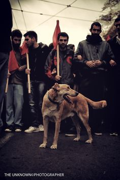 Loukanikos, the Greek Revolutionary (dog) >>> a stray, he joined in the action at the riots taking place at the height of the Eurozone crisis. He 'retired' from protesting in 2012 when he was adopted. He passed away at home in Street Dogs, Cute Creatures, Oppression, Athens, In The Heights, Dog Breeds, Cute Dogs, Greek, Action