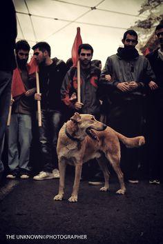 Loukanikos, the Greek Revolutionary (dog)