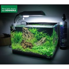Dennerle Scaper's Tank 50L. £63.00 45cm long x 31 high x 36 wide
